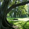 Fitzroy Gardens フィッツロイガーデン