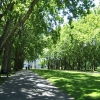 Carlton Gardens カールトンガーデン