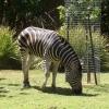 Adelaide Zoo アデレード動物園