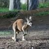 Perth Zoo パース動物園