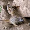 Werribee Open Range Zoo ウェリビーサファリパーク