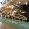 Melbourne Museum メルボルン博物館