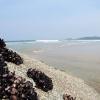 Whisky Beach ウイスキービーチ