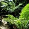 Maits Rest Rainforest マイツレストレインフォレスト