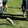 Australian Rainbow Trout Farm オーストラリアレインボートラウトファーム