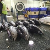 Melbourne Wholesale Fish Market メルボルン魚卸売り市場